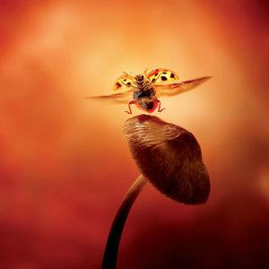Lieveheersbeestje op Paddenstoel Foto Ansichtkaart