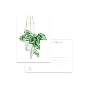 Hangplant - Ansichtkaart