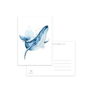 Walvis Sprong - Ansichtkaart