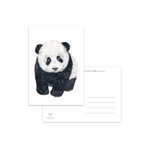 Panda Jong - Ansichtkaart