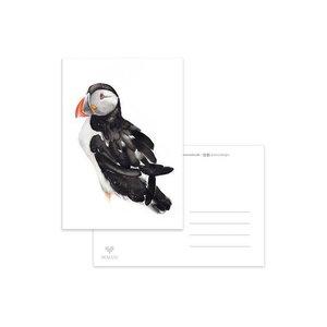 Papegaaiduiker - Ansichtkaart