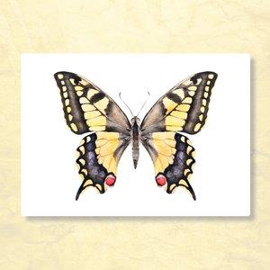 Vlinder Rood Geel Zwart - Ansichtkaart