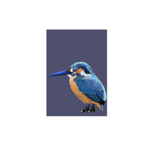 IJsvogel - Ansichtkaart