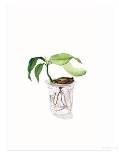 Mangoplant - Postkaart